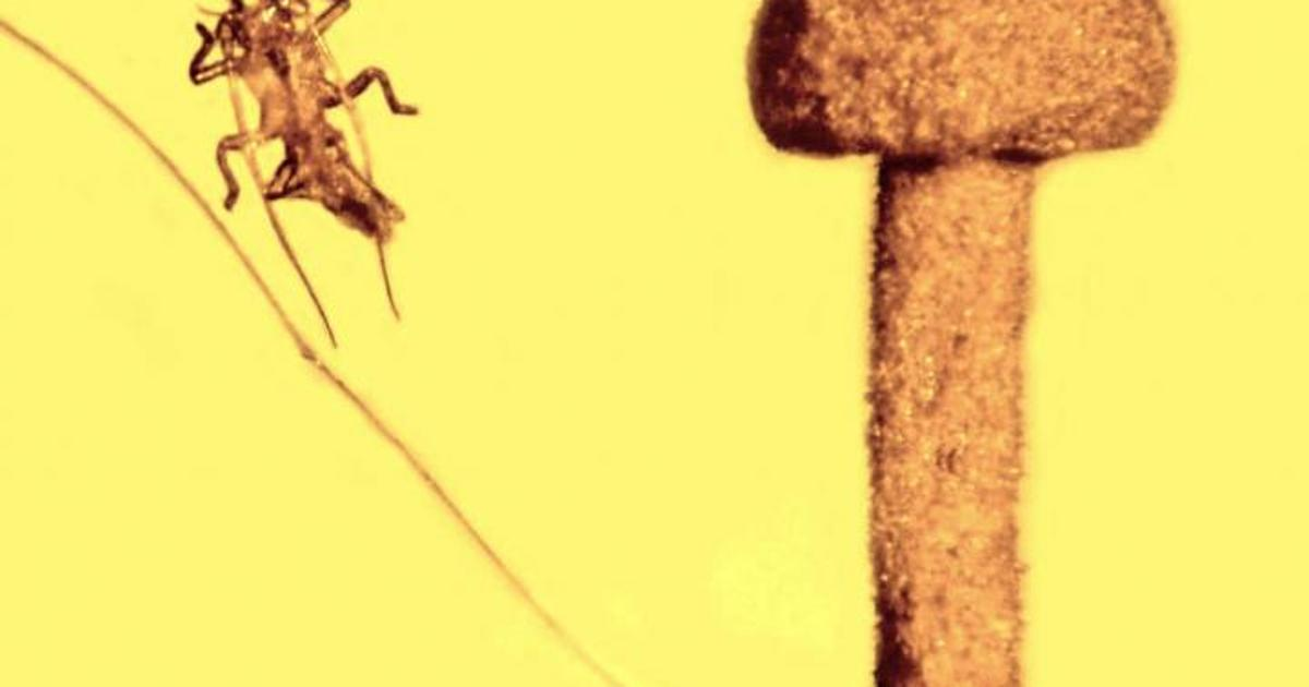 Ancient bug scared out of its own skin escaped amber ambush