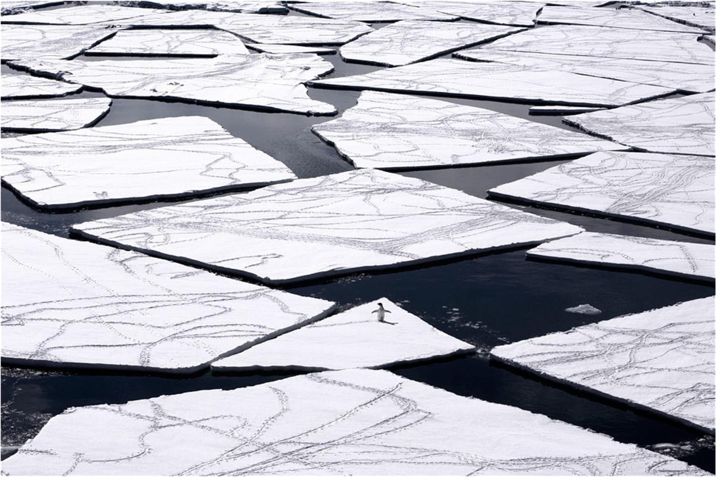 A lone penguin navigates the icy waters of the Ross Sea