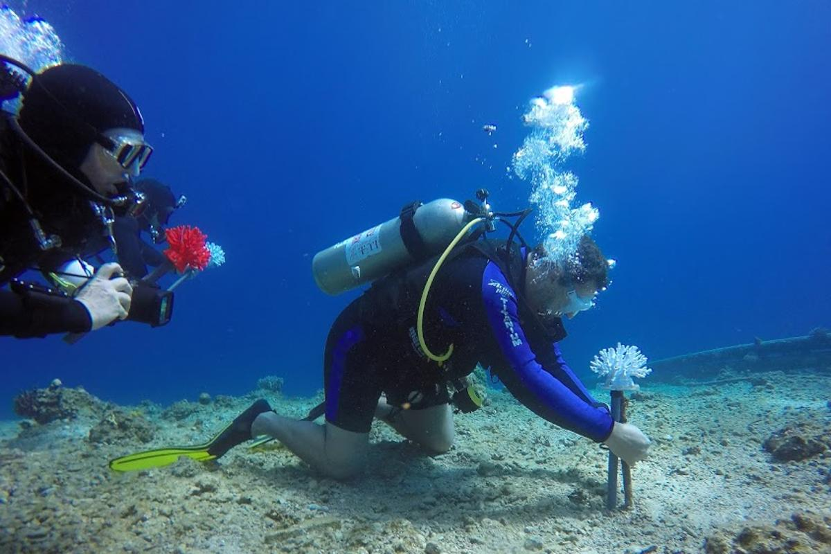 Divers place one of the bioplastic coral heads on a Red Sea reef