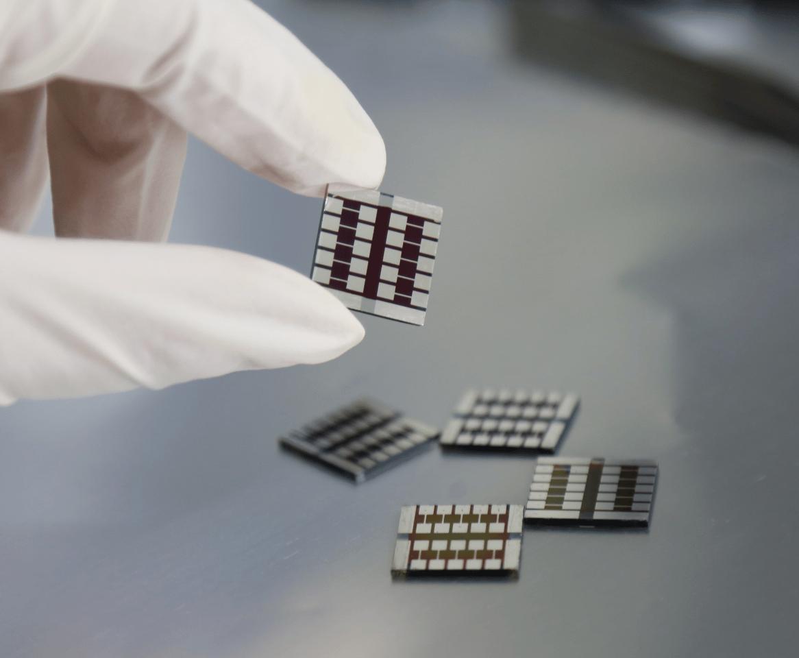 Samples of perovskite solar cells containing capsaicin