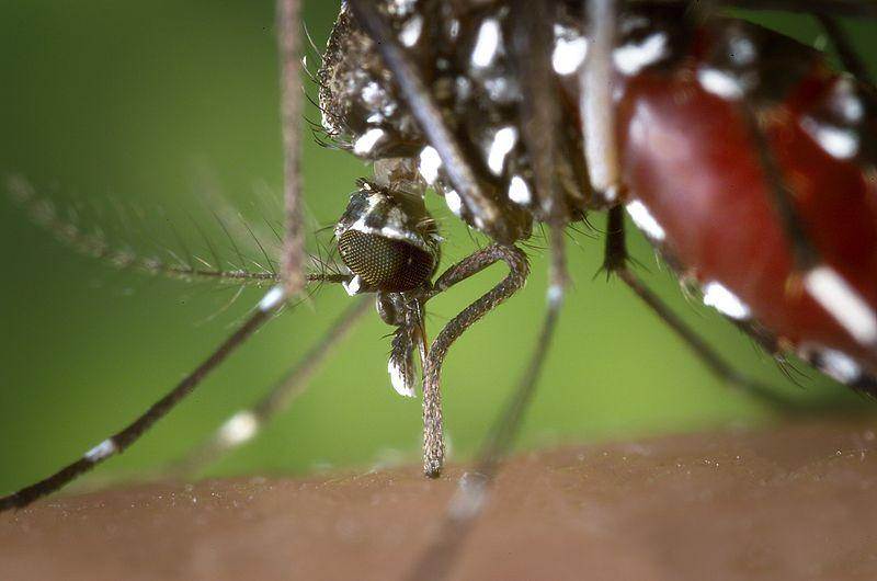 A Japanese scientist has created an almost painless hypodermic needle, inspired by the mosquito's proboscis