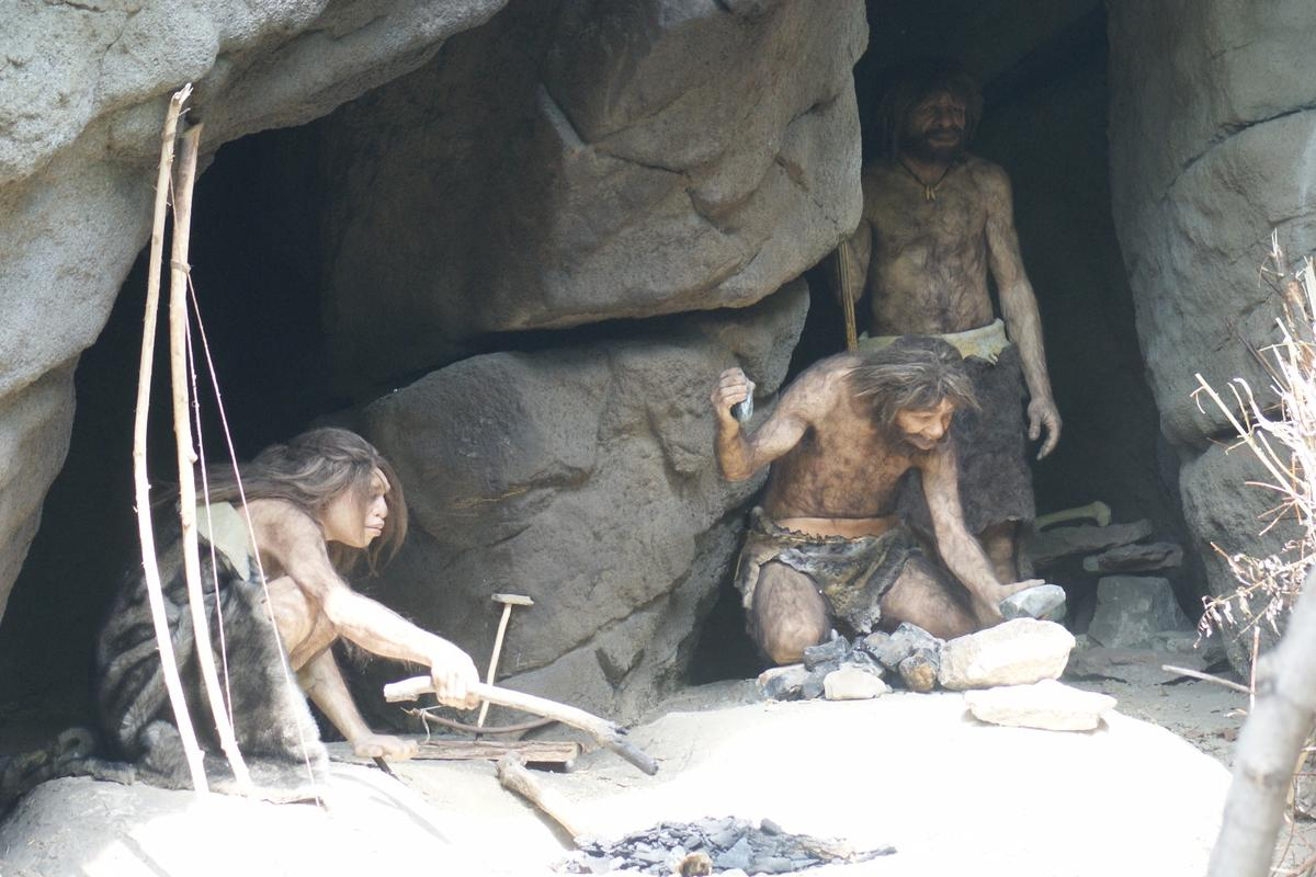 Analysisof Neanderthal teeth gives new clues about their diets, and suggests they may have even understood the pain-relieving effects of certain plants