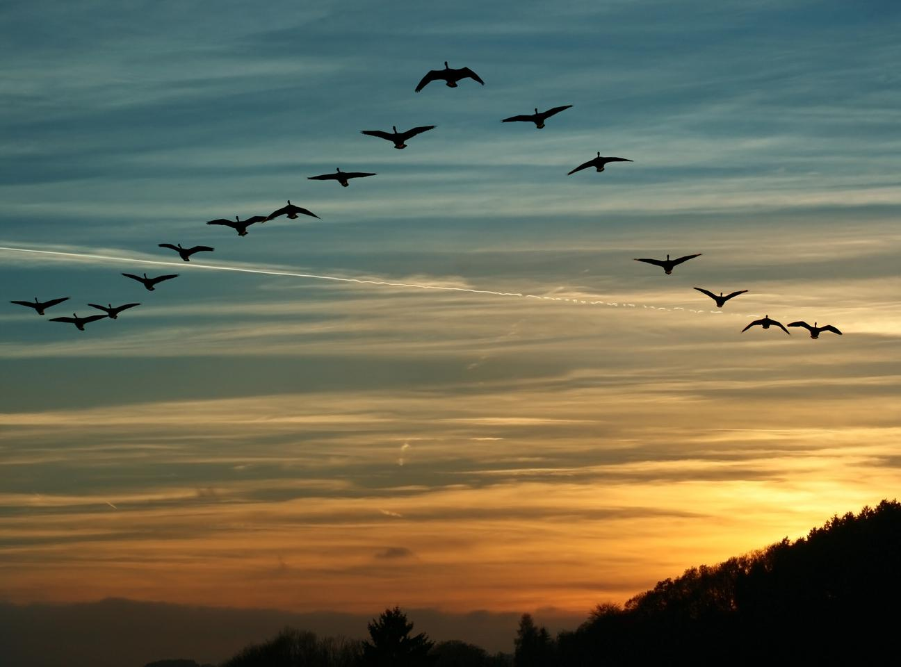 Scientists may have discovered new evidence explaining the cellular mechanism for how birds and other animals can navigate using the Earth's magnetic field