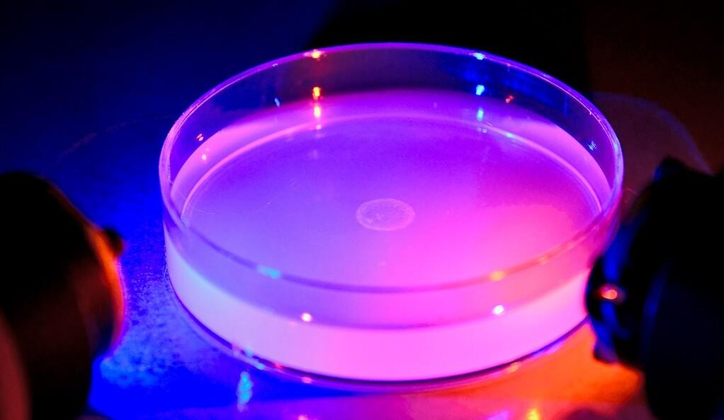 Researchers experiment with how different-colored light affects the foraging behavior of worms
