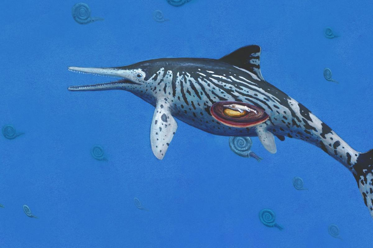 An artist's impression of the Ichthyosaurus somersetensis