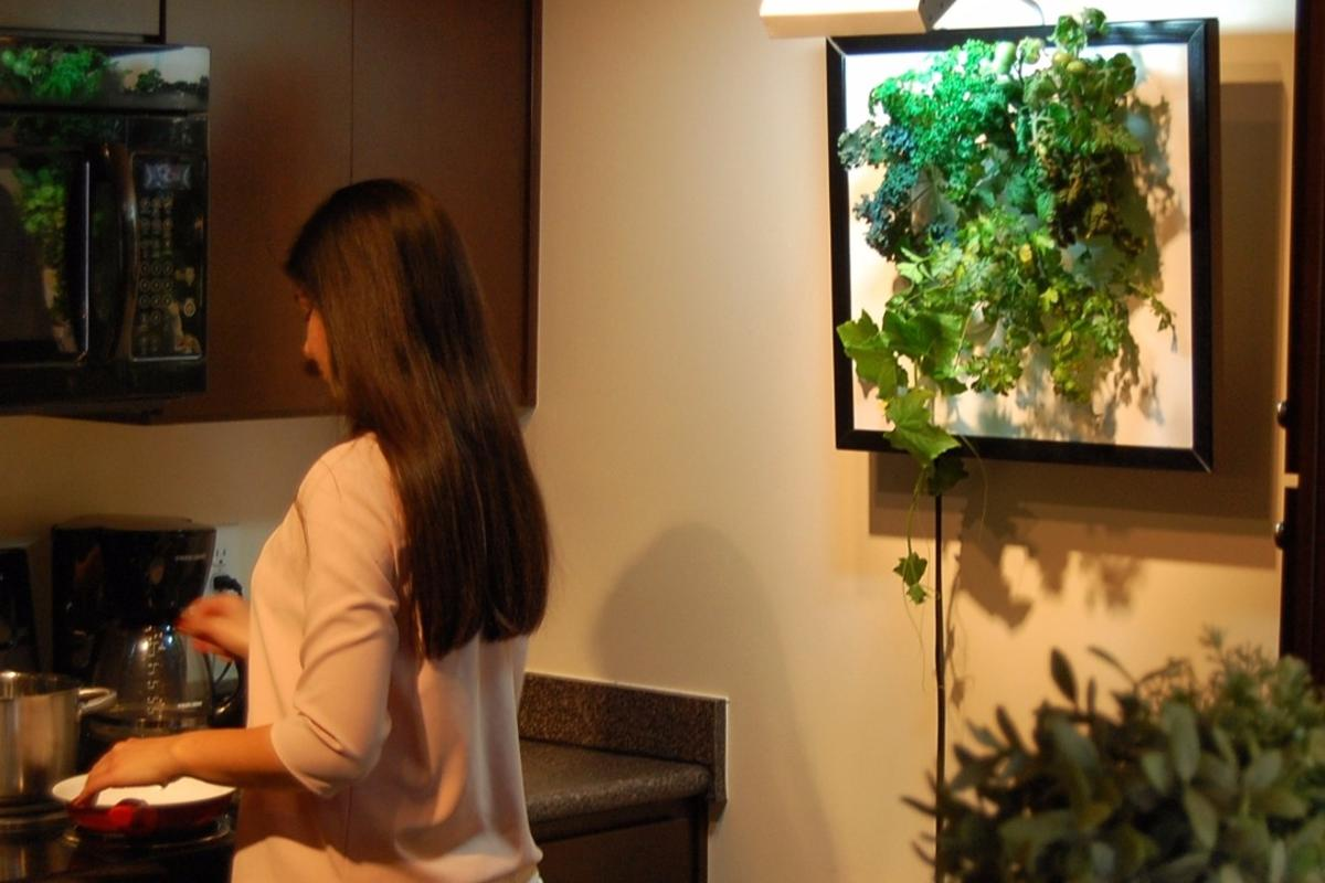 The Wall Garden allows users to grow fresh herbs, flowers and vegetables