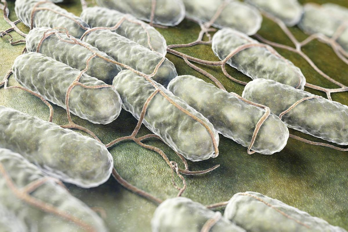 Cornell researchers have found that salmonella-induced food poisoning could permanently damage your DNA