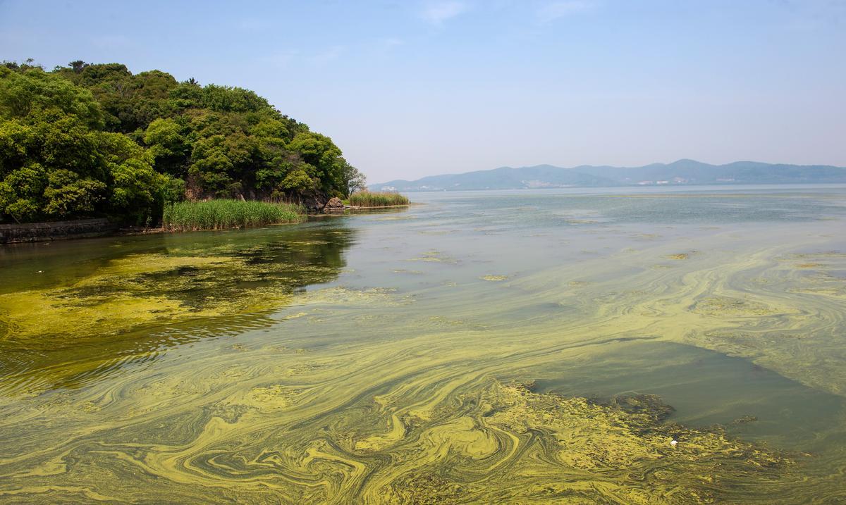 An algae bloom in China's Taihu lake