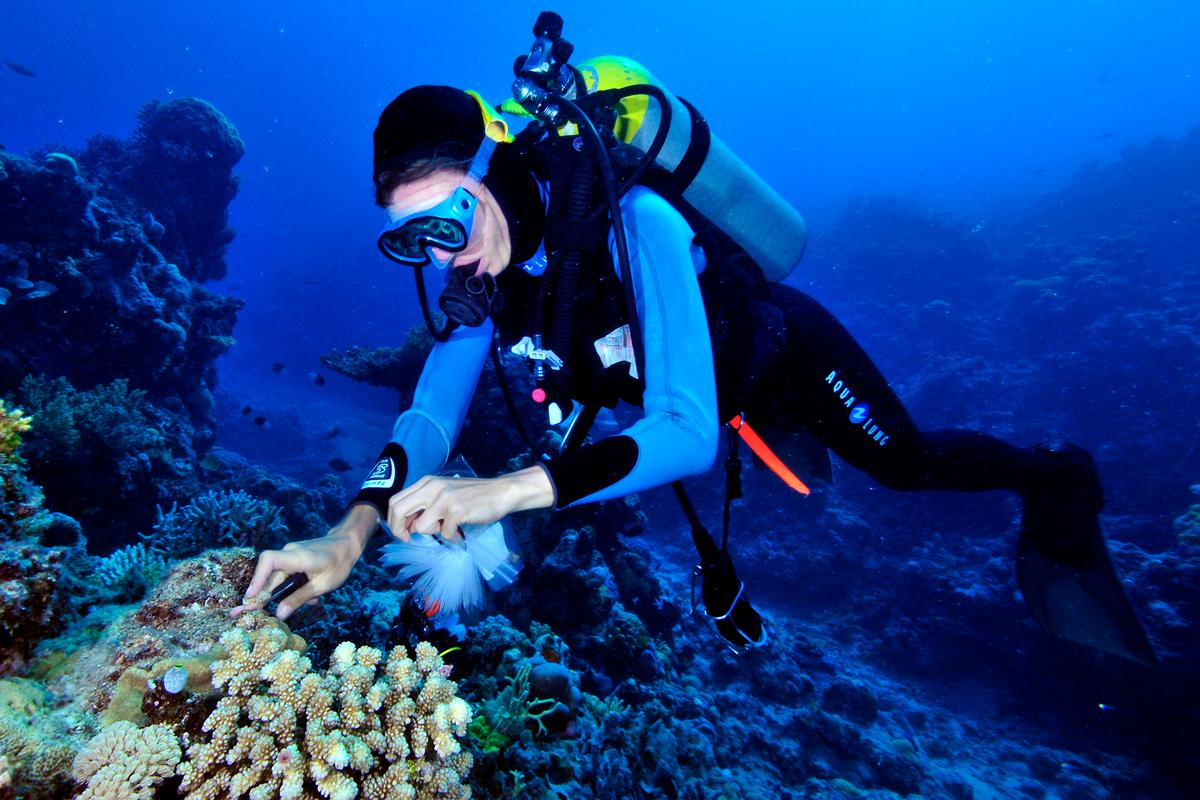 Researcher Petar Souter gathers samples off the coast of Queensland