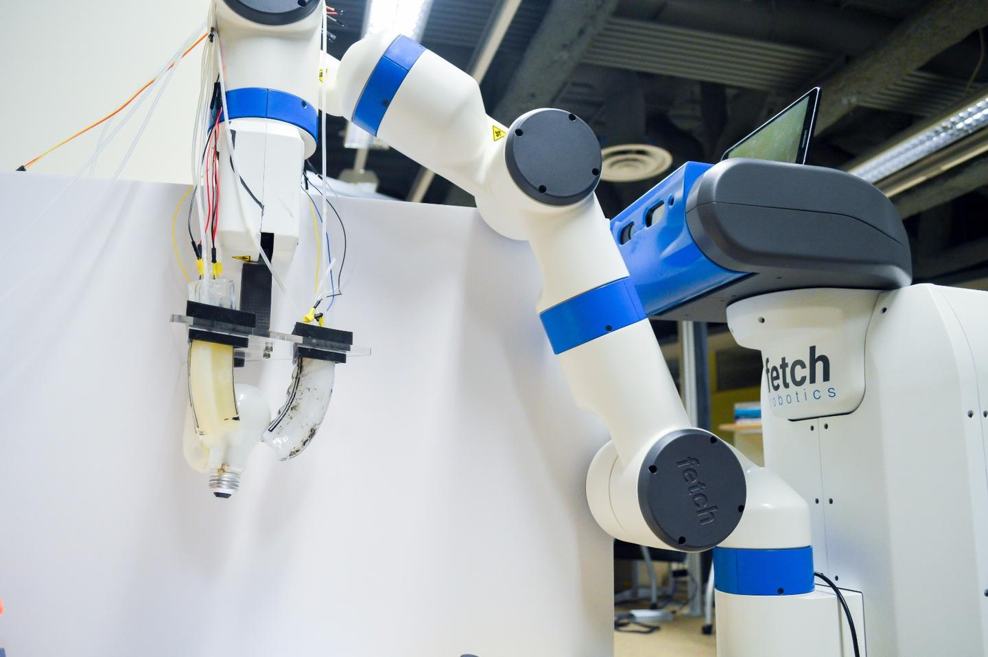 Researchers attached the gripper to the arm of a Fetch Robotics robot