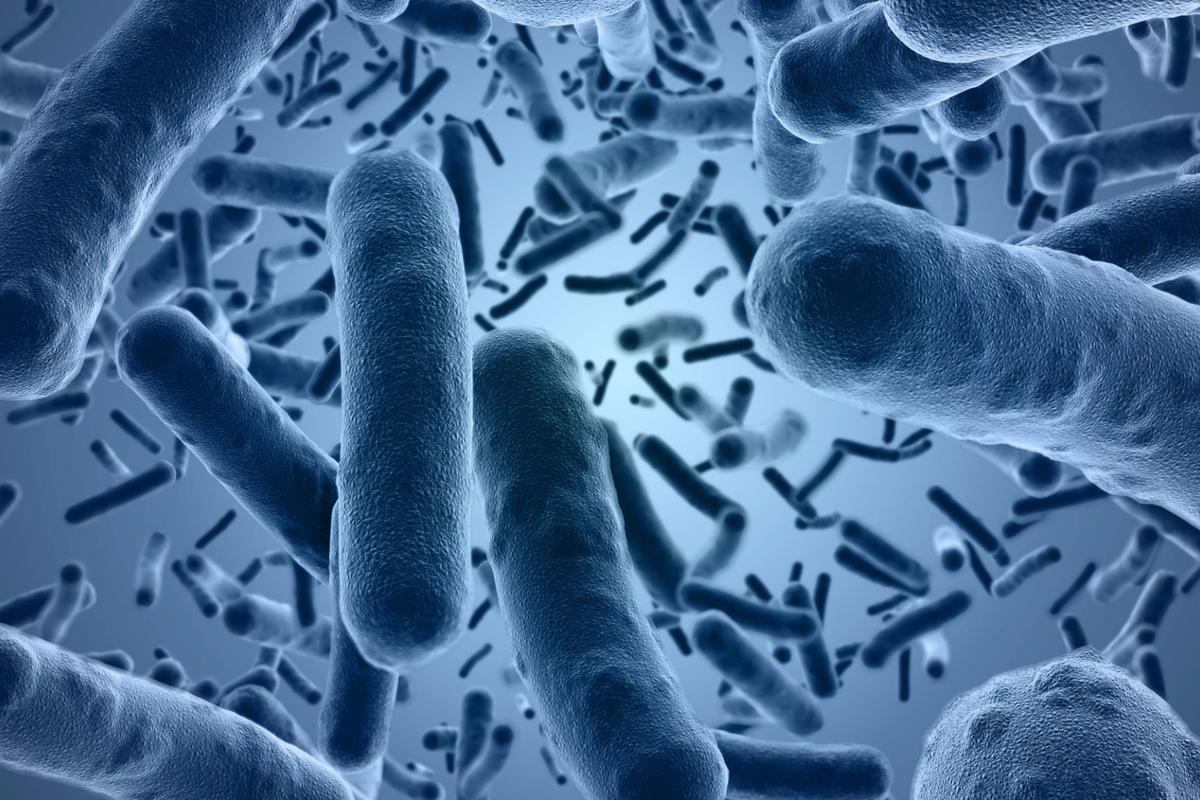 Researchers have found a way to prevent bacteria from transferring genes that help them become resistant to antibiotics