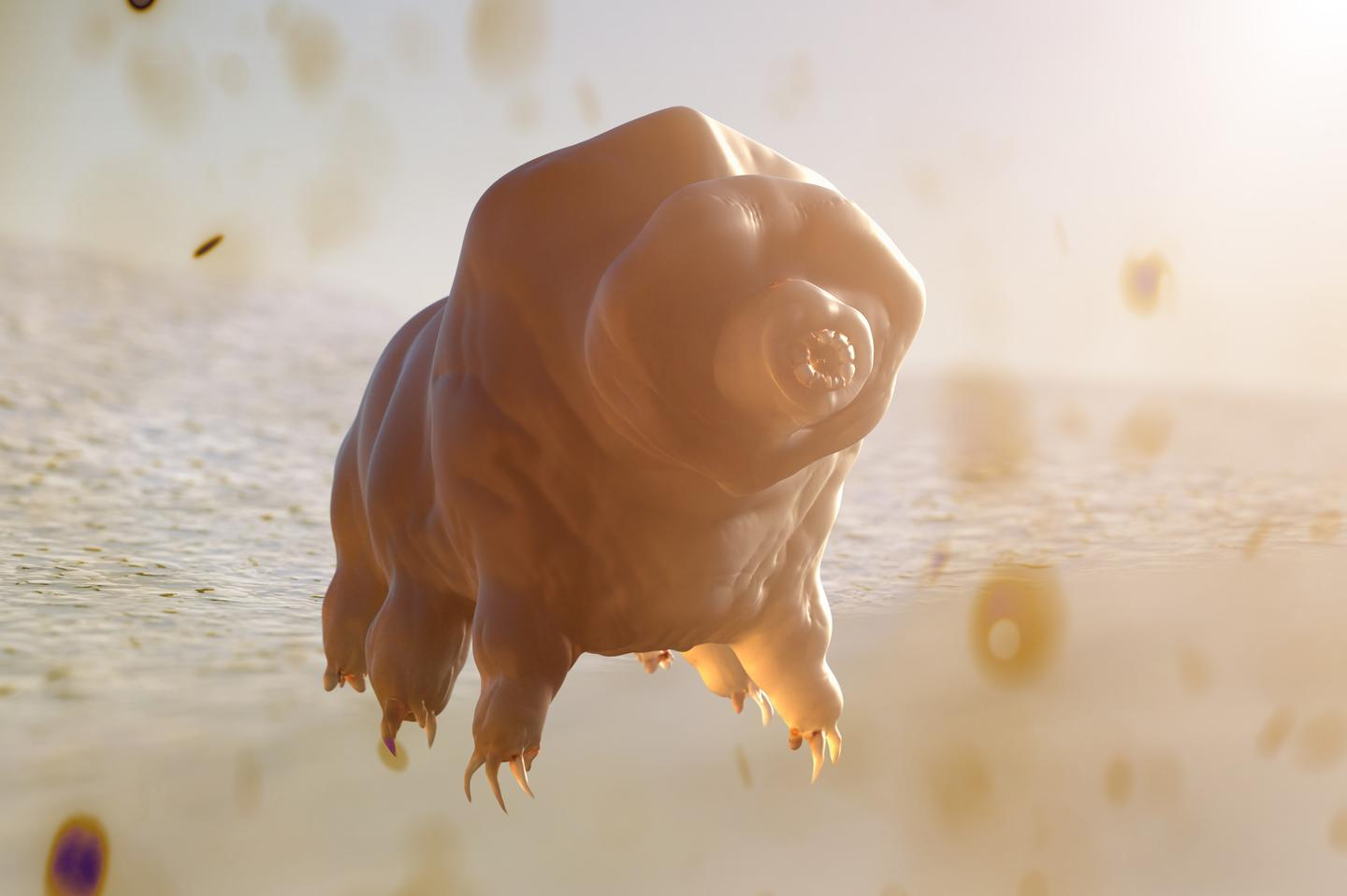 The tardigrade is known to be one of nature's hardiest creatures, and scientists have just discovered a new species that uses a previously unknown tool to survive
