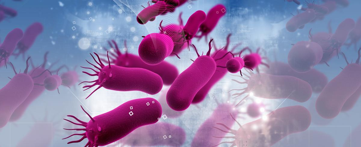 """In anewly discovered """"zombiestate""""bacteria slow down allprocesses to avoid extreme environmental conditions such as antibiotics or lack of nutrients"""
