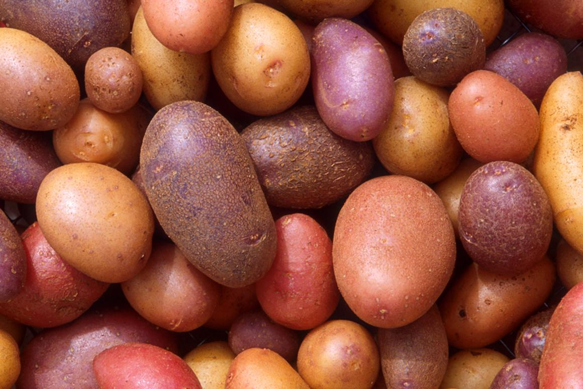 The humble spud can get an antioxidant boost from an electric current or ultrasound waves