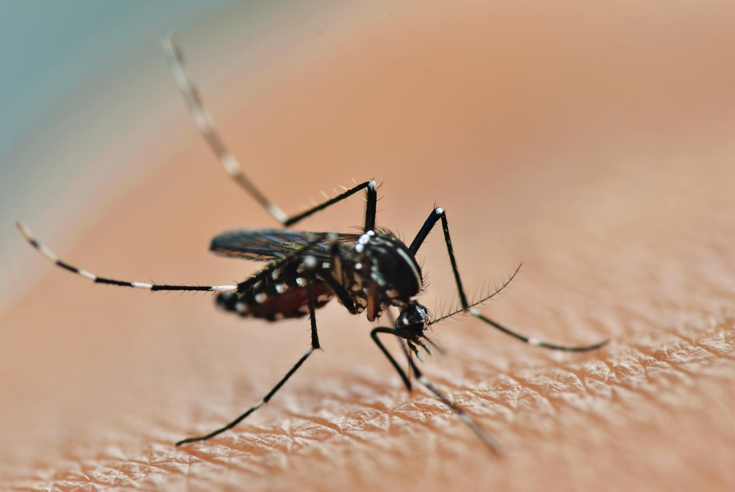 Research has found that mosquitoes use binding proteins on their legs to detect insecticides