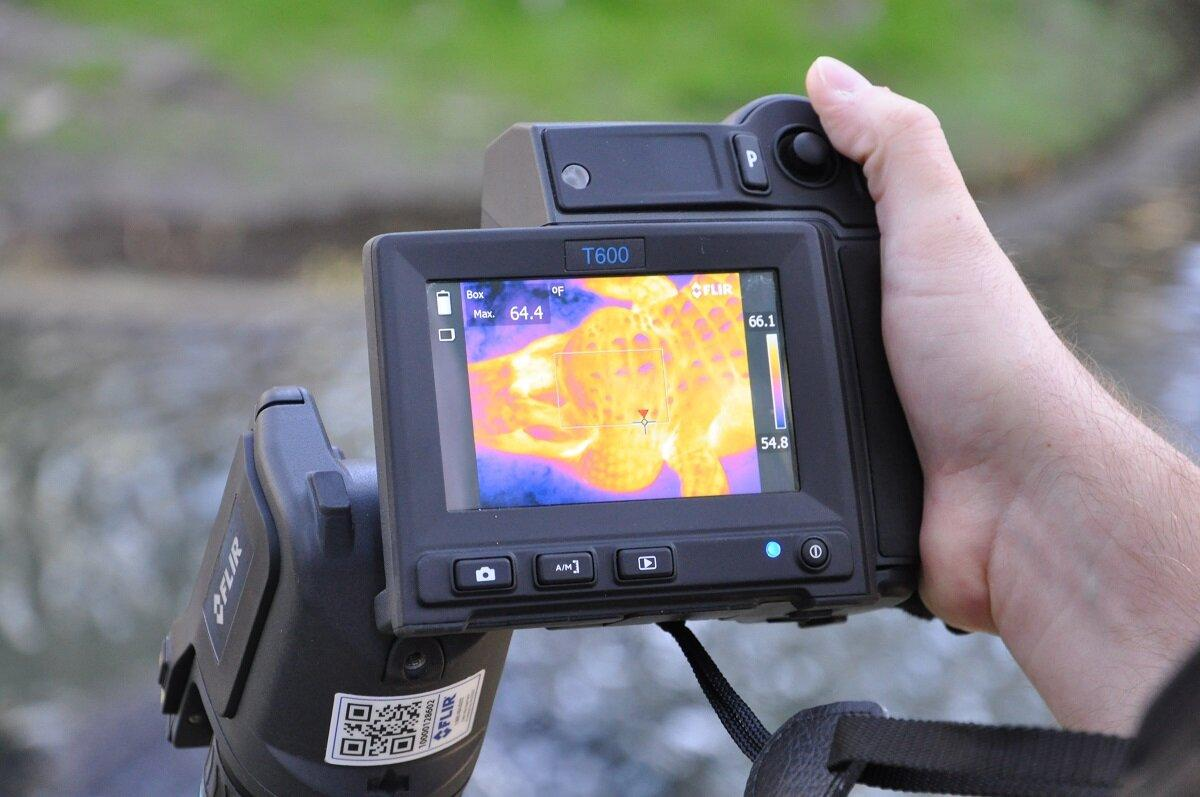 Thermal imaging allowed researchers to capture the body heat of alligators at the St. Augustine Alligator Farm Zoological Park in Florida