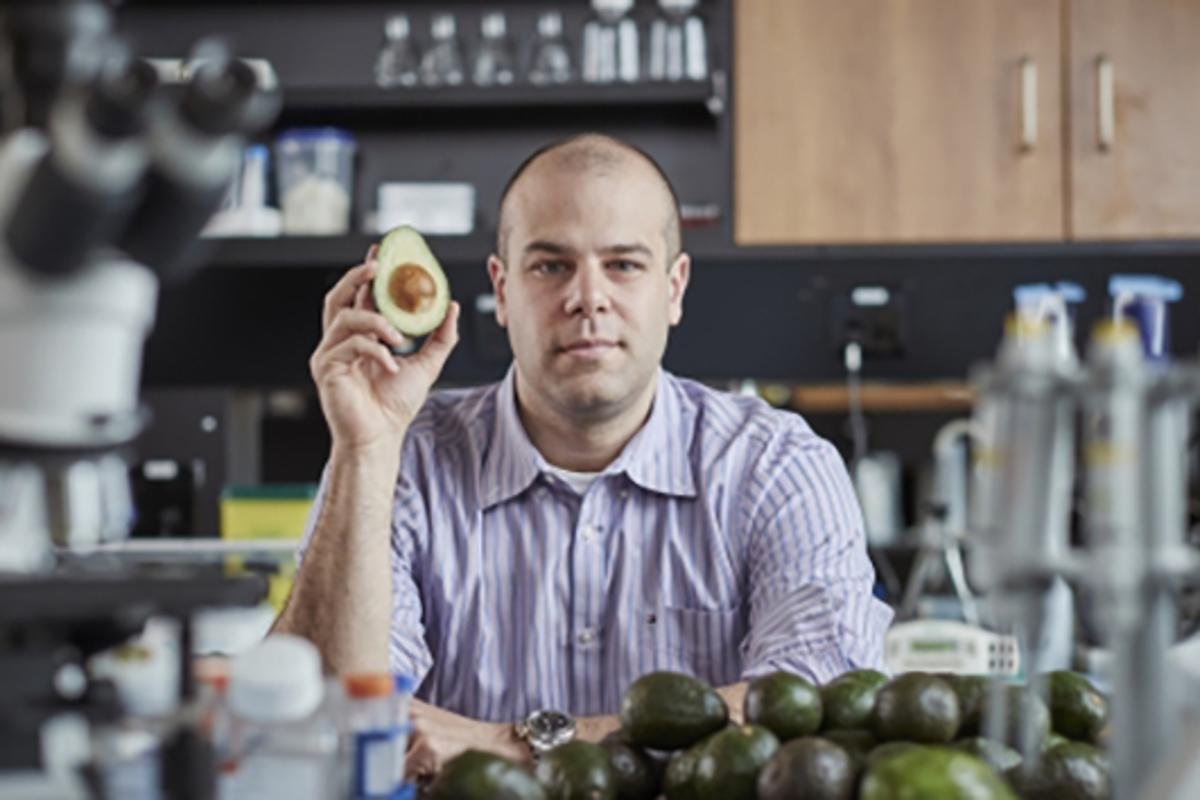 A molecule found in avocado has shown promise as a potential drug to treat a form of leukemia