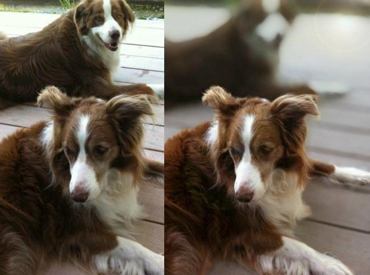 Big Lens is an app that allows users to add a simulated bokeh effect (a blurred-out background) to their iPhone photos