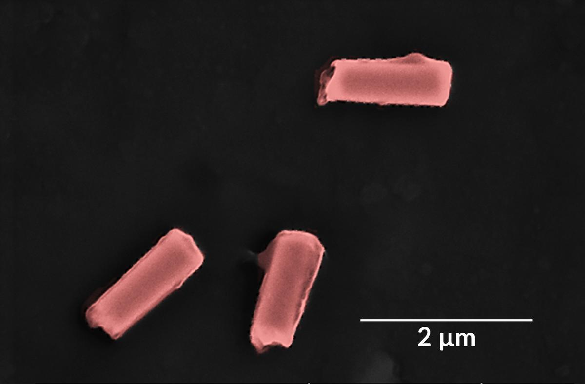 A colored scanning electron microscope image of some of the nanorobots
