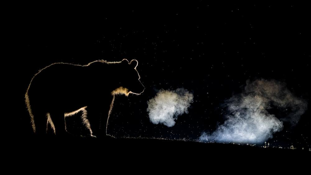 1st place, Professional, Wildlife/Animals. A series investigating light and shade in nature