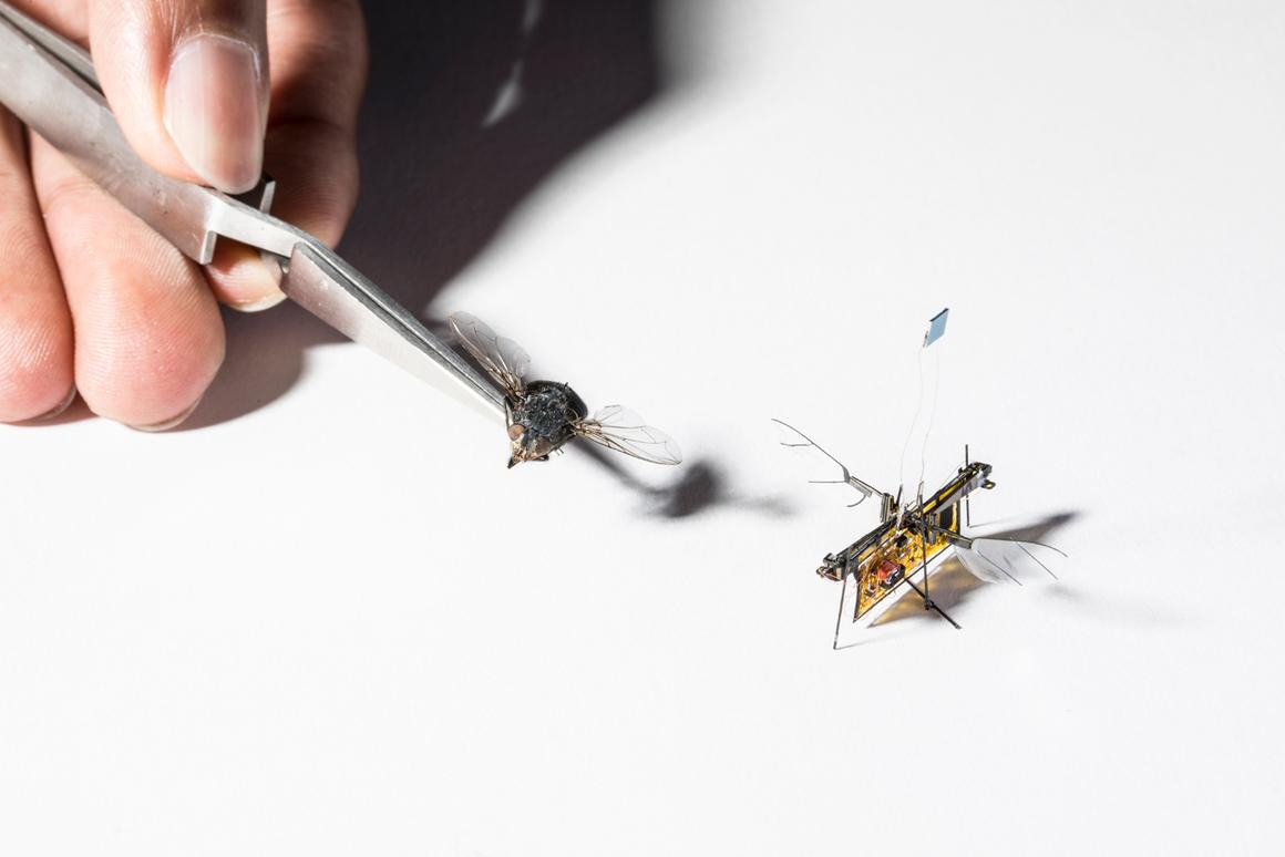 RoboFly is similar in size to the real thing