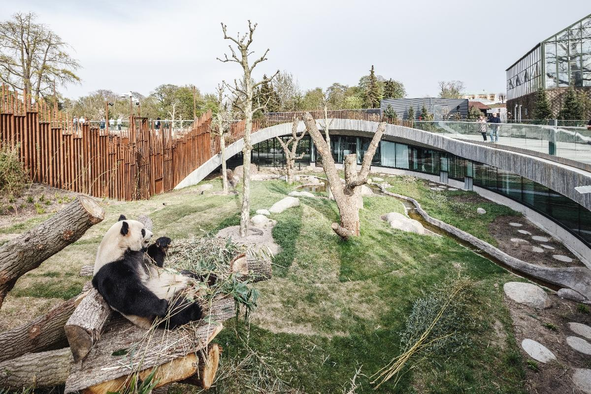 Panda House's yin and yang shape is designed to keep the pandas totally separate