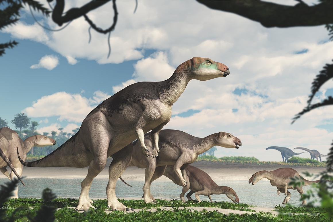 An artist's illustration of the new species, Fostoria dhimbangunmal
