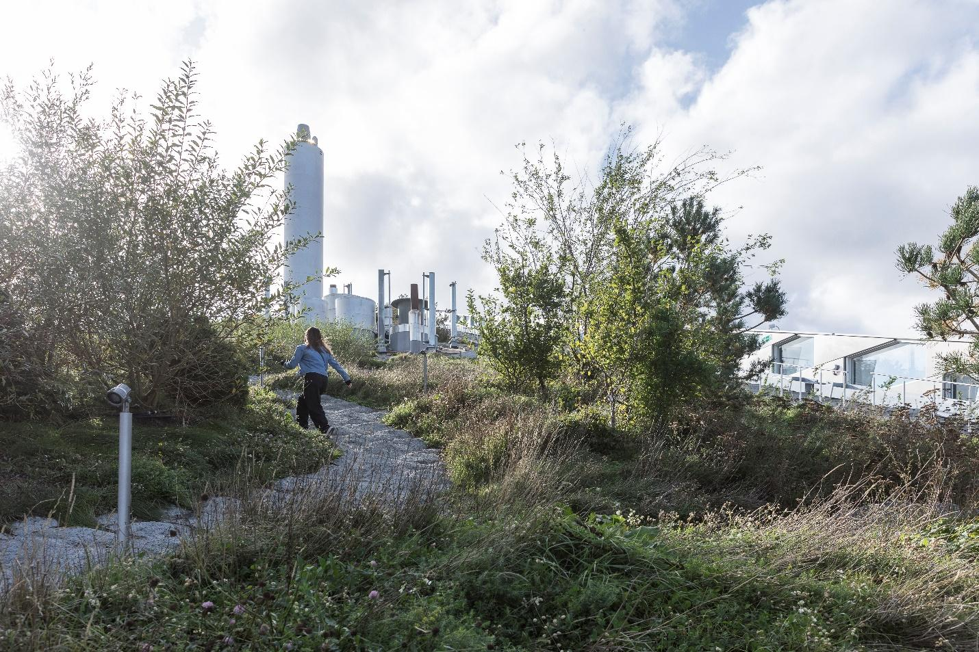 CopenHill's hiking trail is home to thousands of bushes, hundreds of trees and various plants and other greenery