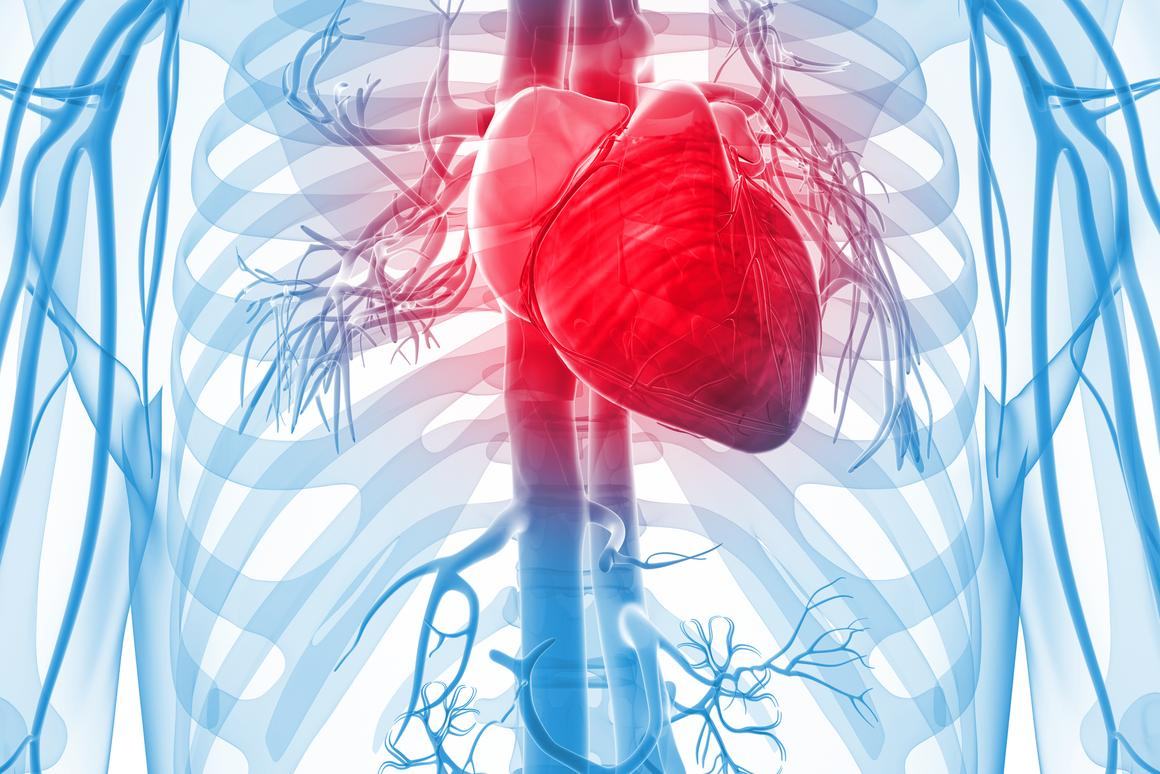 Scientists have created functioning human heart tissue that exhibits Barth syndrome (Image: Shutterstock)