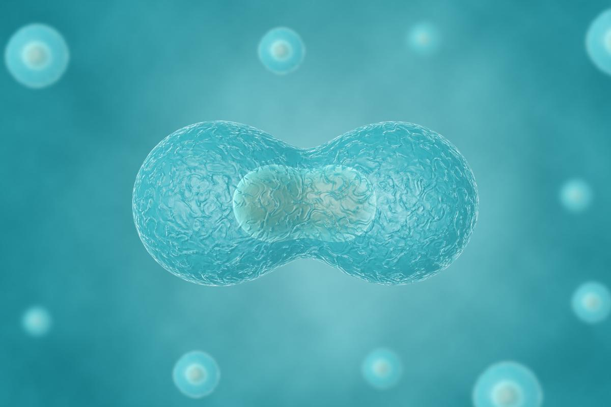 Researchers have managed to recreate cell division outside of a cell