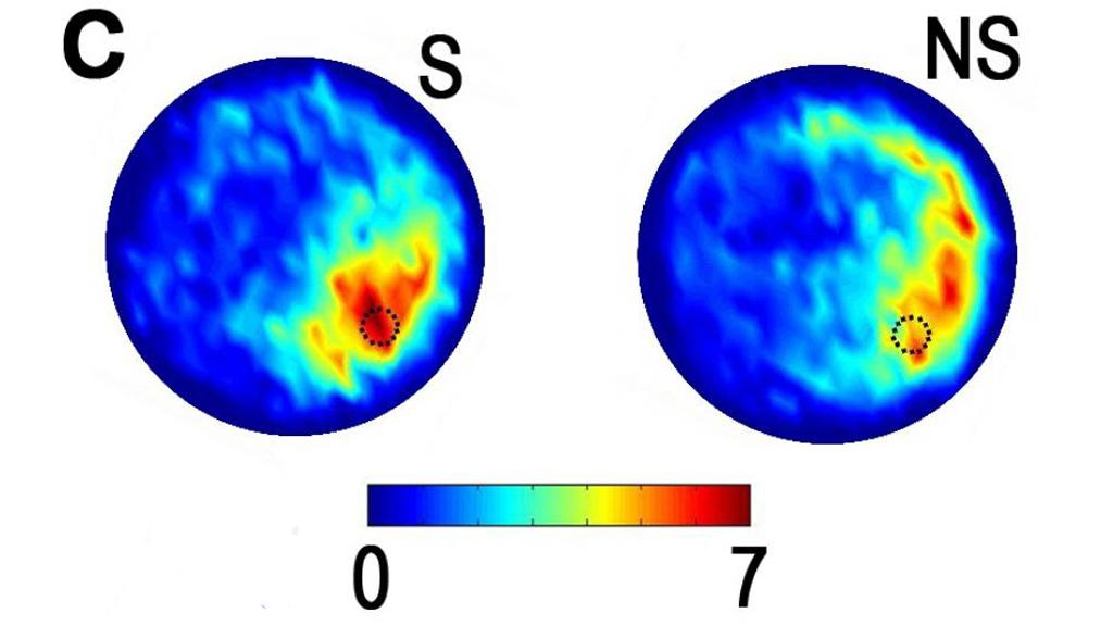 DBS mice (S) spent a greater amount of time (indicated in red) swimming near a submerged landing (dotted circle) compared with non-stimulated mice (NS) indicating improvements in spatial learning (Image: Reprinted with permission: Stone, et al. The Journal of Neuroscience 2011)