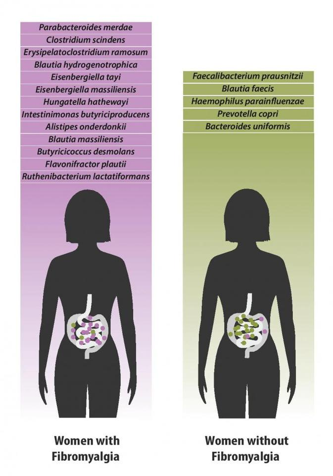 Bacterial species which were found in greater quantities in individuals with fibromyalgia (left) versus species which were found in greater quantities in healthy individuals (right)