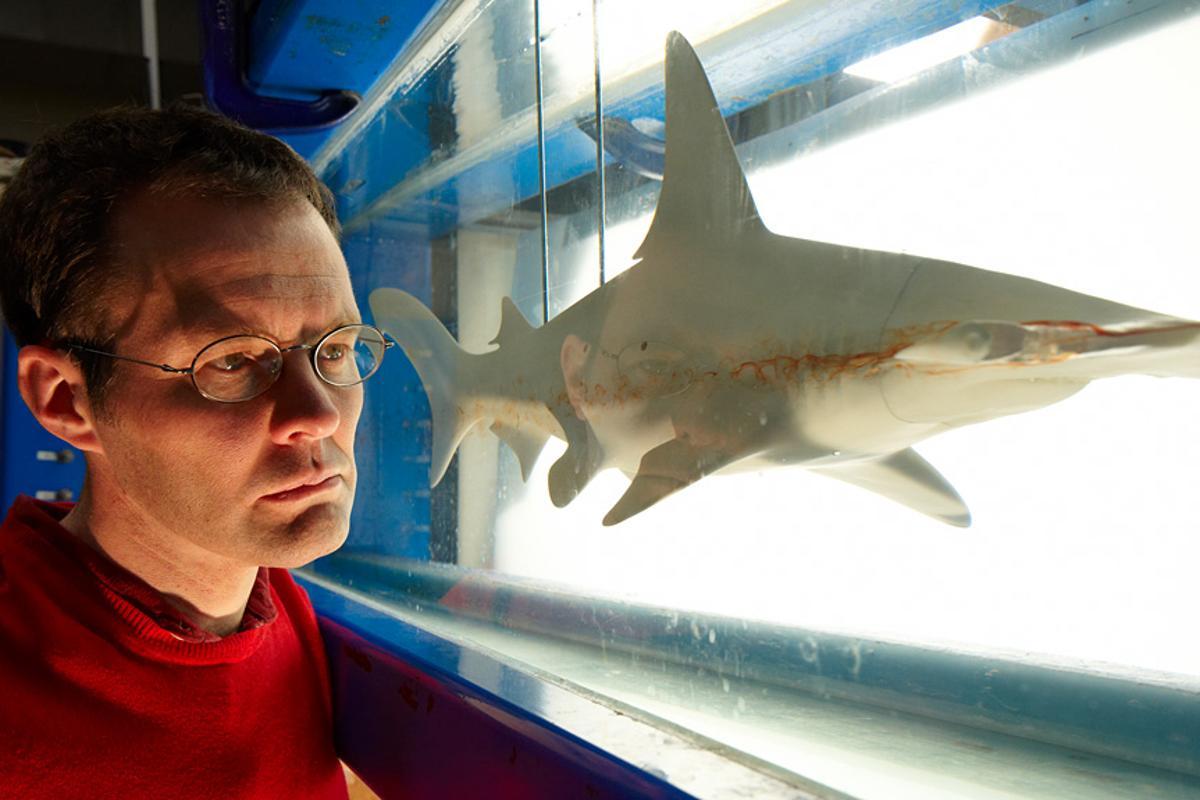 Dr. Jonathan Cox with the model hammerhead shark