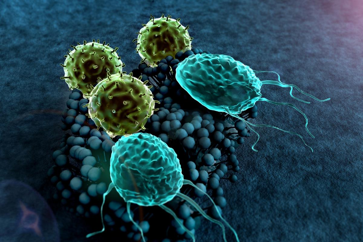 """It's hoped thediscovery of an immune system """"master switch"""" willlead to new clinical treatments for autoimmune diseases within the next few years"""