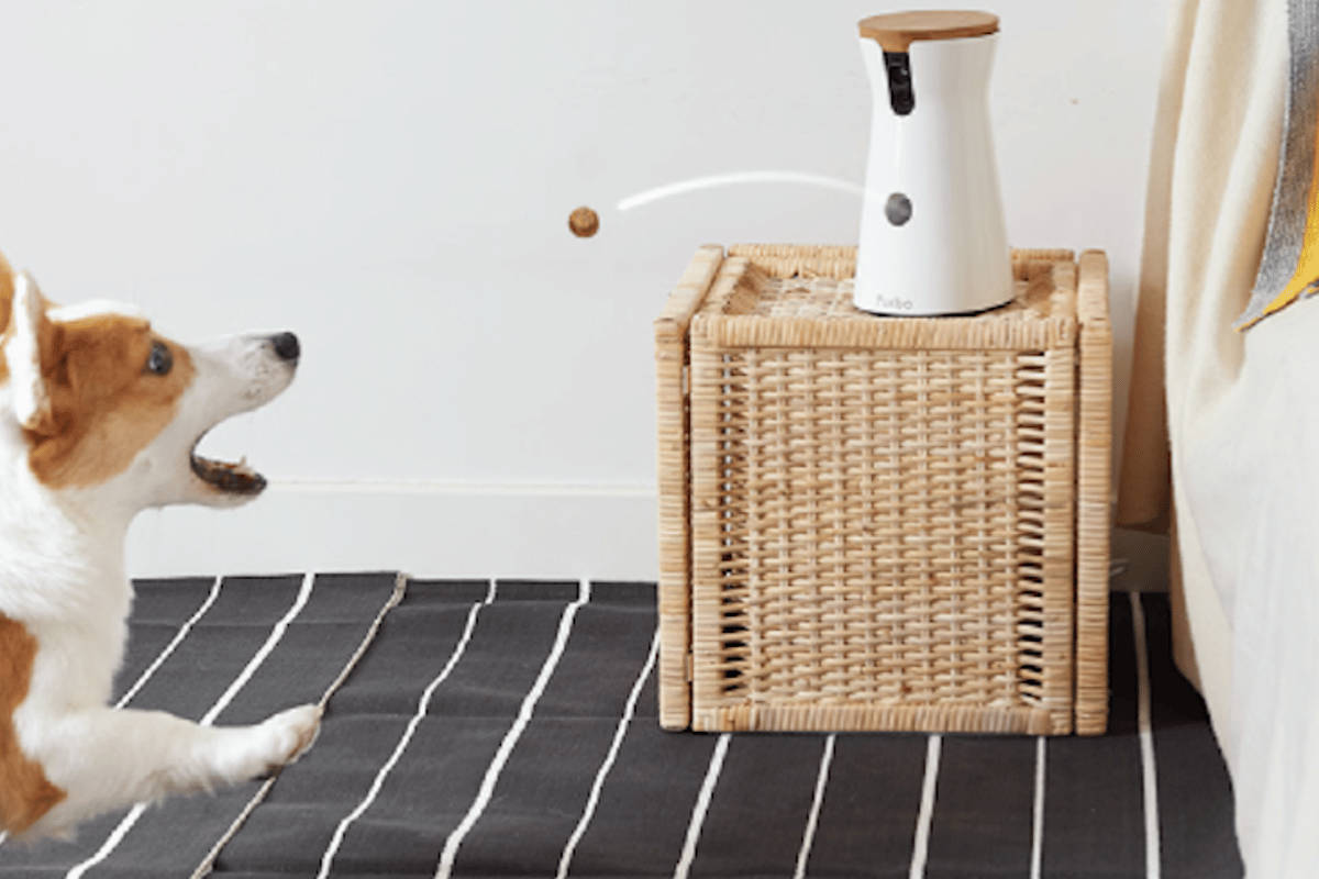 Furbo lets you feed and talk to your dog remotely