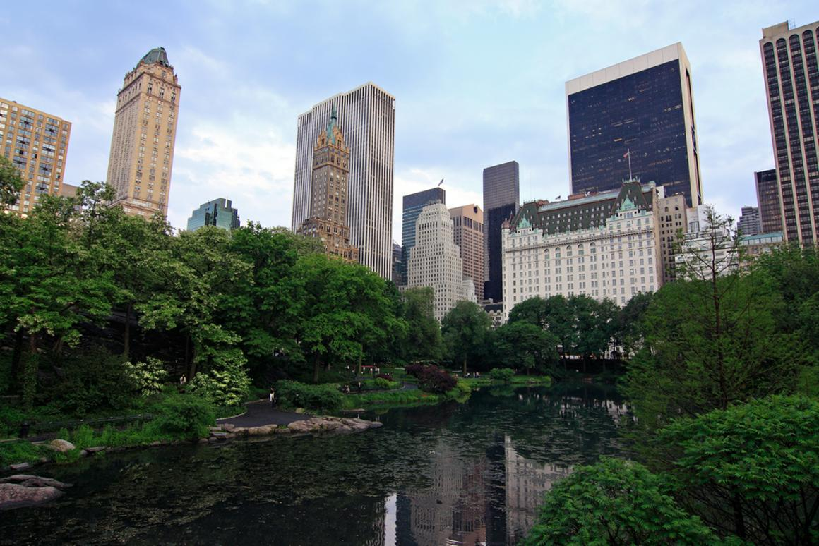 Seedlings did eight times better in New York City's Central Park than at comparable suburban and rural sites (Photo via Shutterstock)