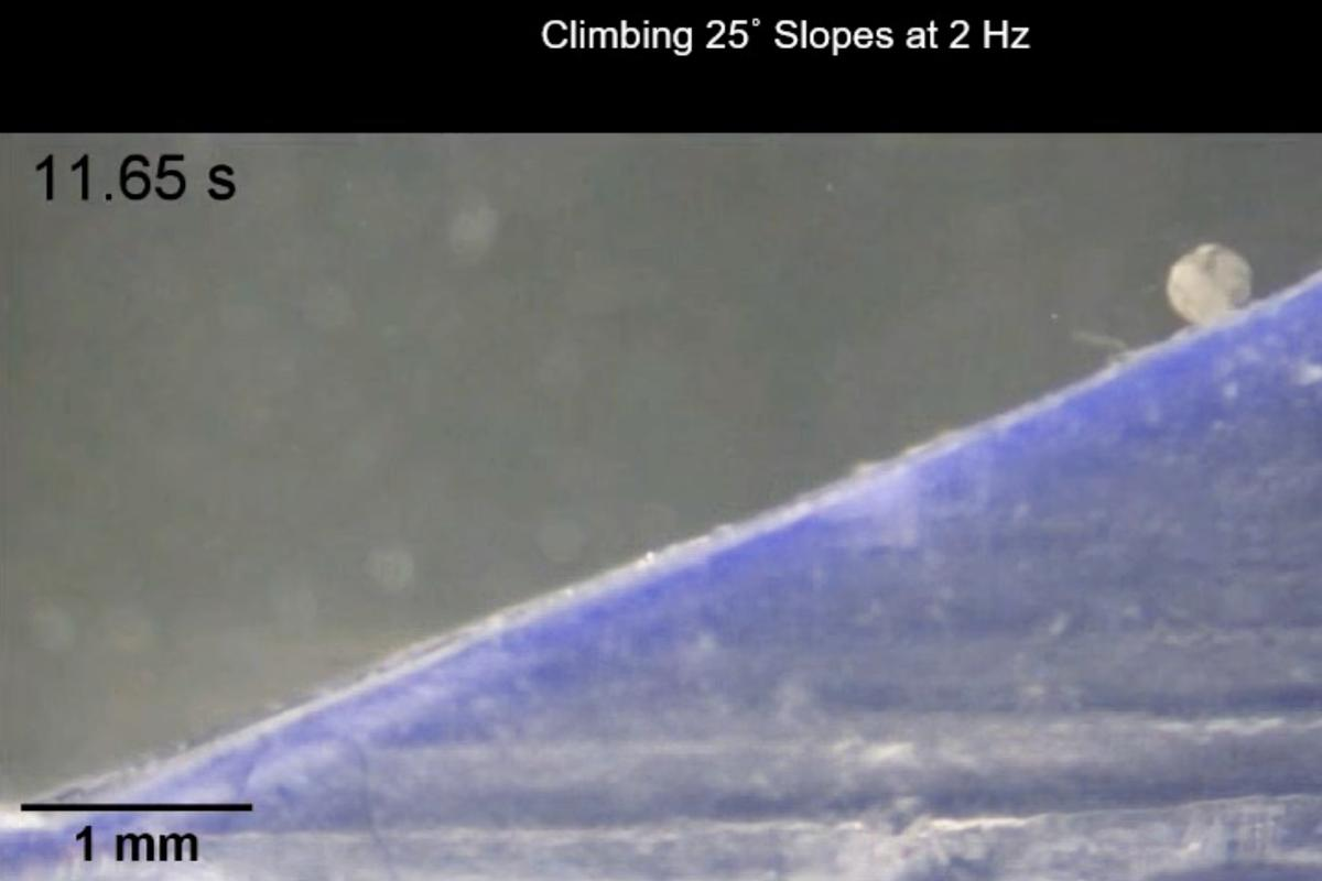 One of the magnetically guided MANiAC microbots (right) rolls up a 25-degree slope