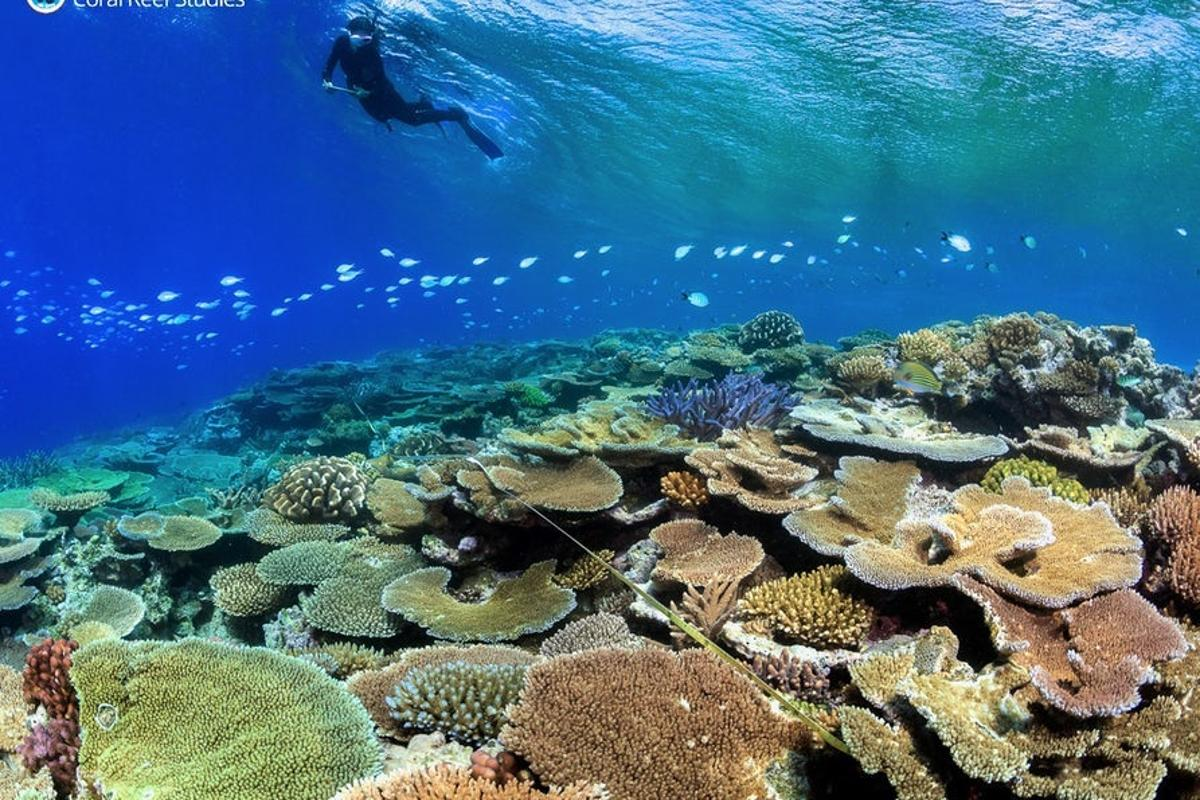 The Great Barrier Reef is under threat from a string of coral bleaching events prompting the development of new ideas to help it