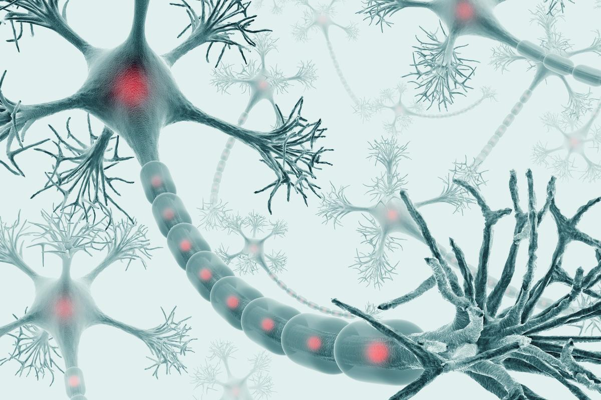 An artist's impression of neurons and the nervous system