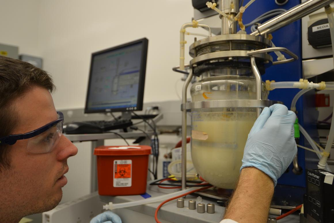 Graduate student Zachary Baer works with a fermentation chamber to separate acetone and butanol (clear top layer) from the fermented brew at the bottom (Photo: Robert Sanders, UC Berkeley)