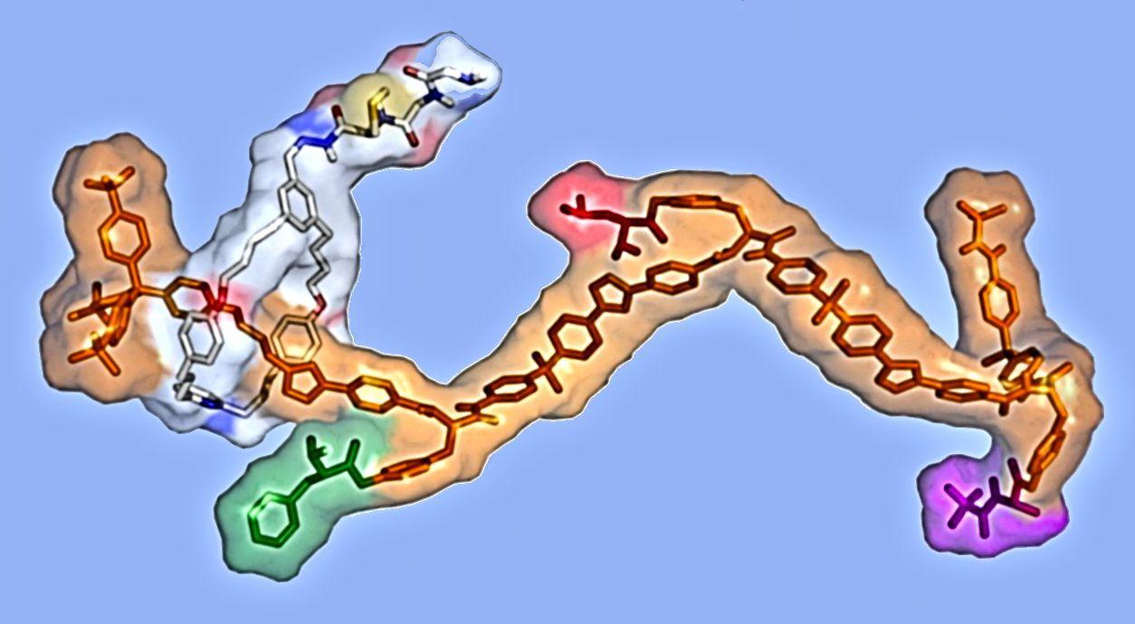 Molecular assembler synthesized by Prof. Leigh of the University of Manchester and his group