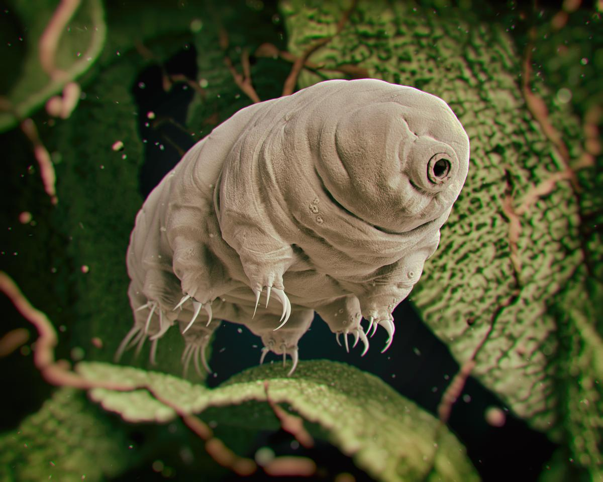 Scientists have tested the survivability of tardigrades in high impacts