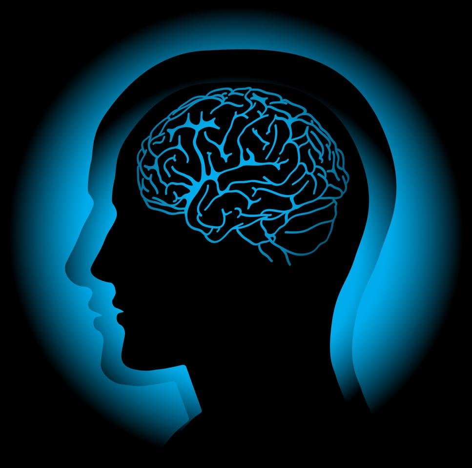 Profile of human head with visible brain. Vector