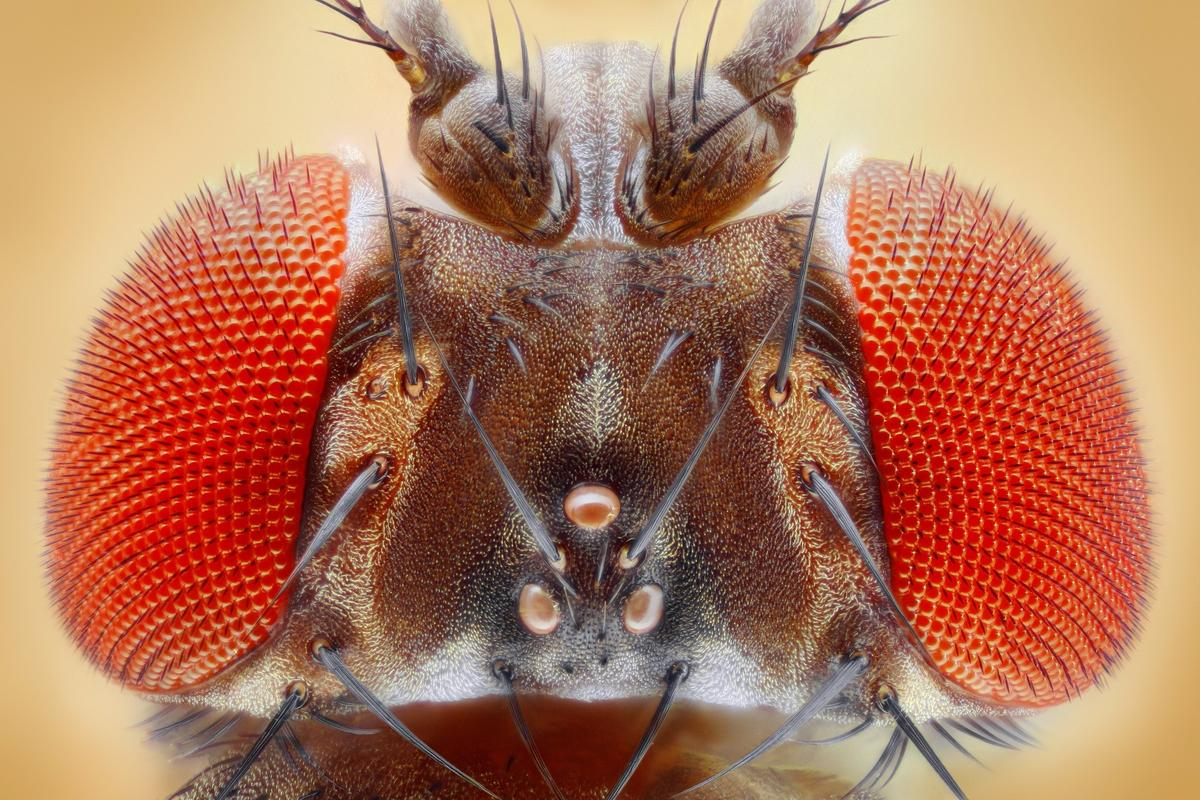 Fluorescent molecules help neuroscientists visualize the neural pathways of a fruit fly brain during complex behaviors, and this could reveal new insights about the workings of the mind