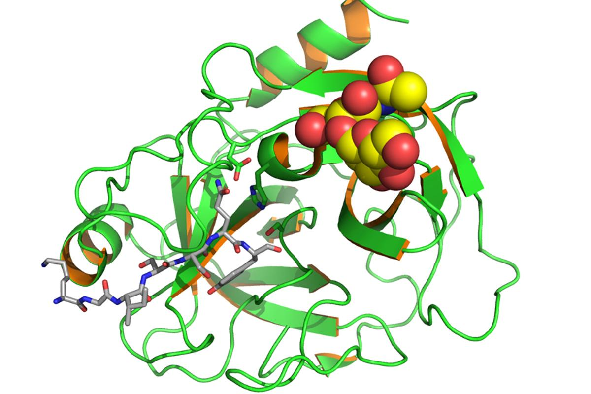 The new ultra-sensitive biosensor has been demonstrated by detecting very small concentrations of Prostate Specific Antigen (pictured) (Image: EAS via Wikipedia)