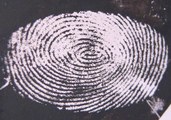 A fingerprint obtained from a stainless steel surface, using the new technique