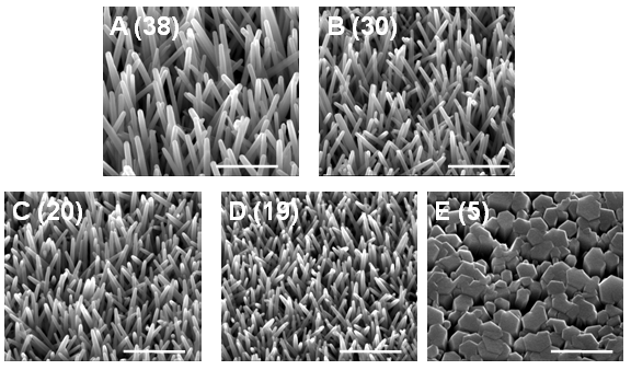 Various aspect ratios of ZnO nanotubes created for this research, where higher ratios had greater efficiencies (Photo: Professor James Durrant)