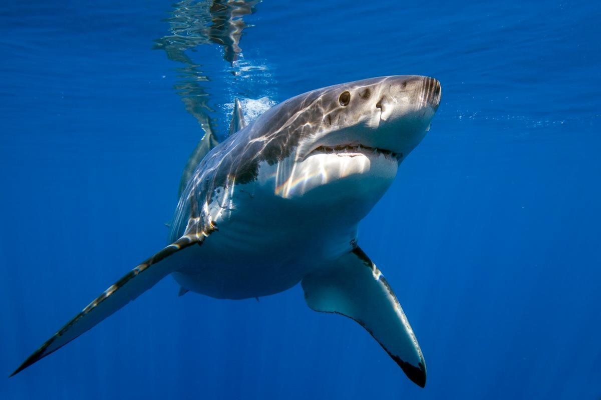 Researchers have tested the effectiveness of various technologies designed to deter sharks
