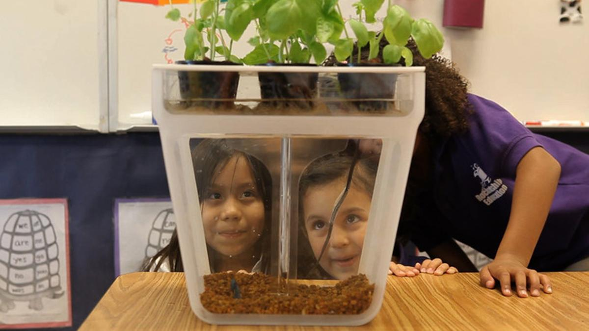 The Home Aquaponics Kit provides the perfect opportunity to educate kids about the process involved in food production
