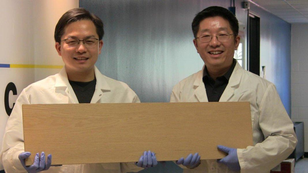 """A new densification process can make""""super wood"""" that's 12times stronger than natural wood"""